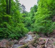 日晴朗森林的横向 岩石和注册山小河的床 免版税库存照片