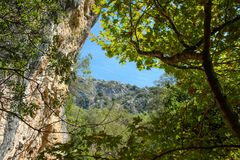 日晴朗森林的横向 免版税库存照片