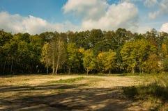 日晴朗森林的横向 库存图片