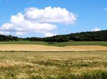 日晴朗的农田 库存照片