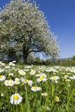 日晴朗草甸的春天 免版税库存照片