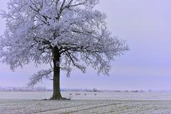 日有薄雾的冬天 域偏僻的结构树 库存照片