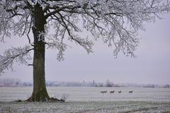 日有薄雾的冬天 域偏僻的结构树 免版税库存照片