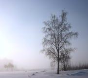 日有薄雾的冬天 库存照片
