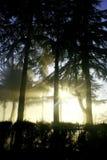 日有雾的光芒星期日 免版税库存照片