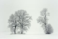 日有雾的冬天 在域的结构树 免版税库存图片