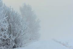 日有雾的冬天 在路结构树附近 免版税图库摄影
