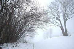 日有雾的冬天 图库摄影