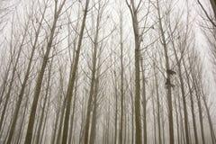 日有雾的森林 库存照片