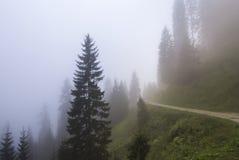 日有雾的森林 免版税库存照片