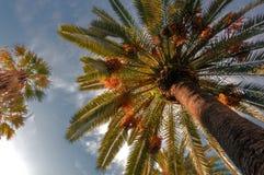 日期结构树 库存照片