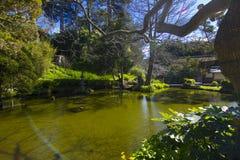 日本人Koi池塘庭院 免版税库存照片