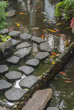 日本人Koi鲤鱼在日本庭院池塘  库存图片