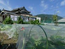 日本传统房子和庭院 免版税库存照片