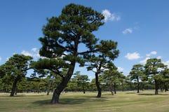 日本公园 免版税库存图片