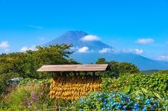 日本农村农业场面用干燥玉米和富士山 库存图片