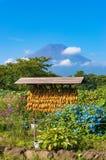 日本农村农业场面用干燥玉米和富士山 免版税库存照片