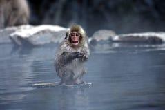 日本在雪附近的jigokudani猴子长野 免版税图库摄影