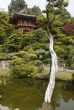 日本塔和树 库存照片