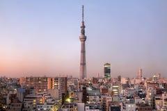 日本天空东京结构树 库存图片