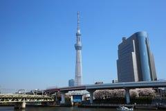 日本天空东京结构树 图库摄影