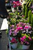 日本室外花店 库存照片