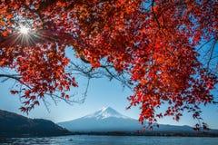 日本富士山和Kawaguchiko湖秋天与槭树红颜色叶子的明信片视图 图库摄影