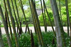 日本庭院在春天,竹树丛和草里 免版税库存照片
