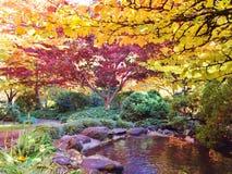 日本庭院在有色的秋天叶子的氧化锂公园 库存照片