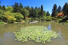 日本庭院在西雅图, WA。 有荷花的池塘。 免版税库存照片