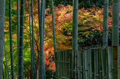 日本庭院的在秋天,日本竹树丛 库存图片