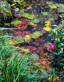 日本庭院的秋天池塘 图库摄影
