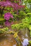 日本庭院美丽如画和五颜六色的树和叶子  库存图片