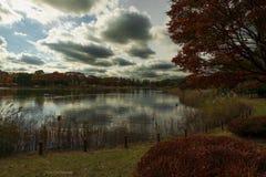 日本庭院-昭和记念公园 免版税库存照片