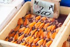 日本新壳在新鲜市场上 免版税库存图片