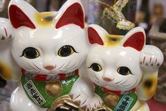 日本时运猫 库存图片