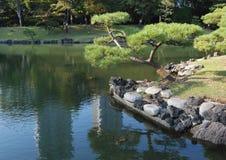 日本杉木 免版税库存图片