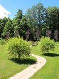 日本杨柳灌木在庭院里 图库摄影