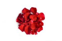 日本标志 在白色背景的红色玫瑰花瓣圈子 免版税图库摄影