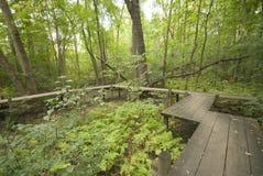 日本桥梁在森林 库存照片