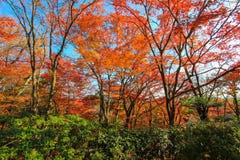 从日本森林的惊人的场面 库存图片