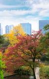 日本槭树的美好的秋天颜色留给色变我 免版税库存图片