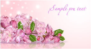 日本樱花 库存照片