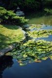 日本池塘 库存图片
