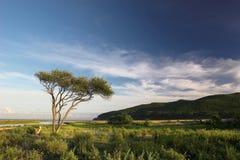 日本海。 秋天。 14 免版税库存图片