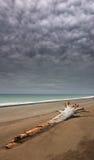 日本海。 秋天。 3 免版税库存照片