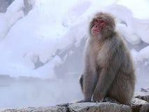 日本温泉猴子 免版税库存照片