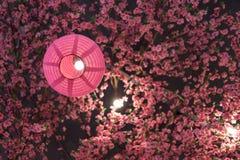 日本灯笼与塑料佐仓的桃红色颜色 库存照片