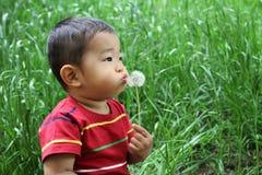日本男孩吹的蒲公英种子 免版税库存照片