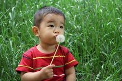 日本男孩吹的蒲公英种子 图库摄影